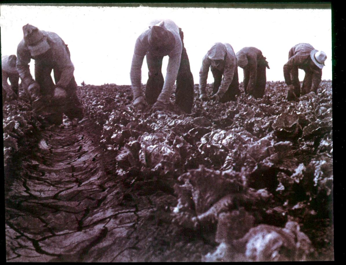 9-lettuce-pickers-salinas-valley-1938